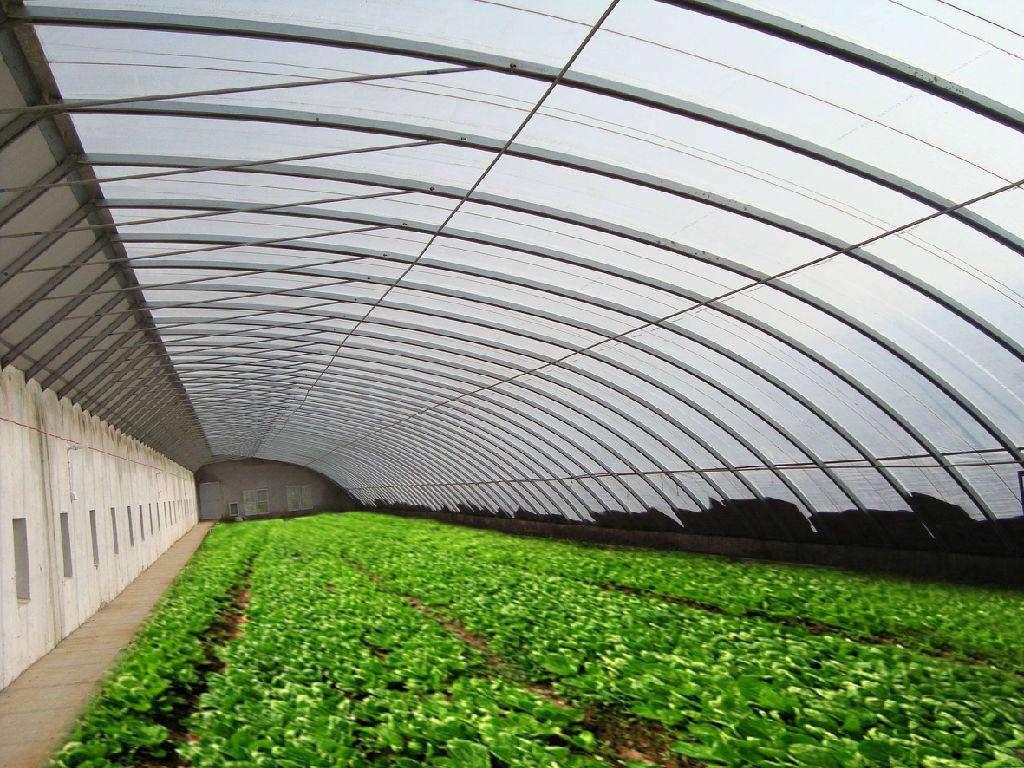 影響大棚蔬菜生長的條件有哪些