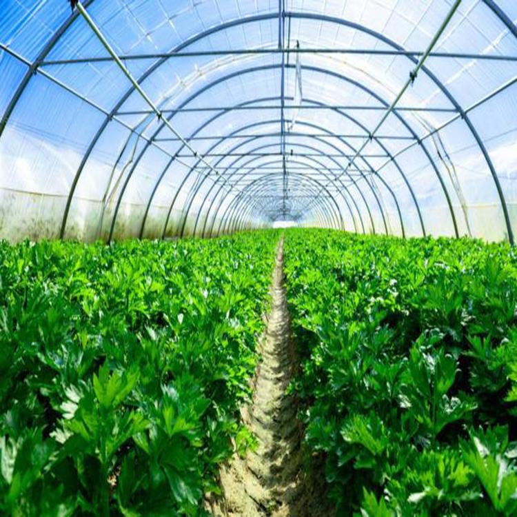 對于簡易蔬菜大棚搭建的幾點建議