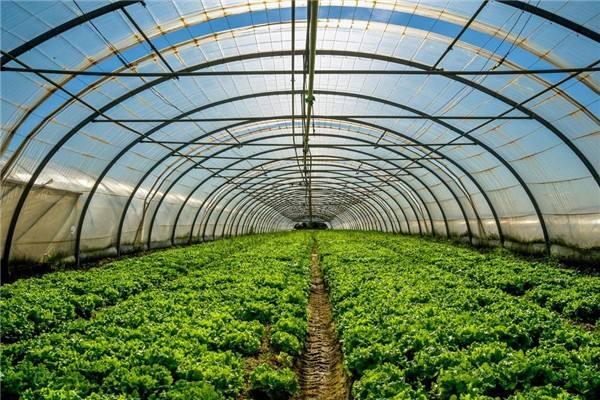 蔬菜大棚的種植技術有哪些?